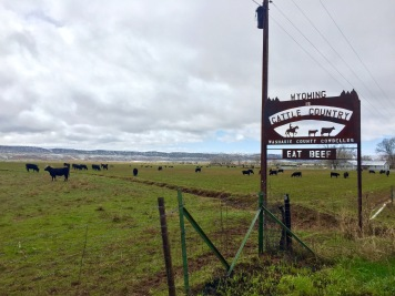 This here's cattle country!