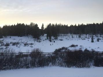 Winter moose deep in the Bighorn
